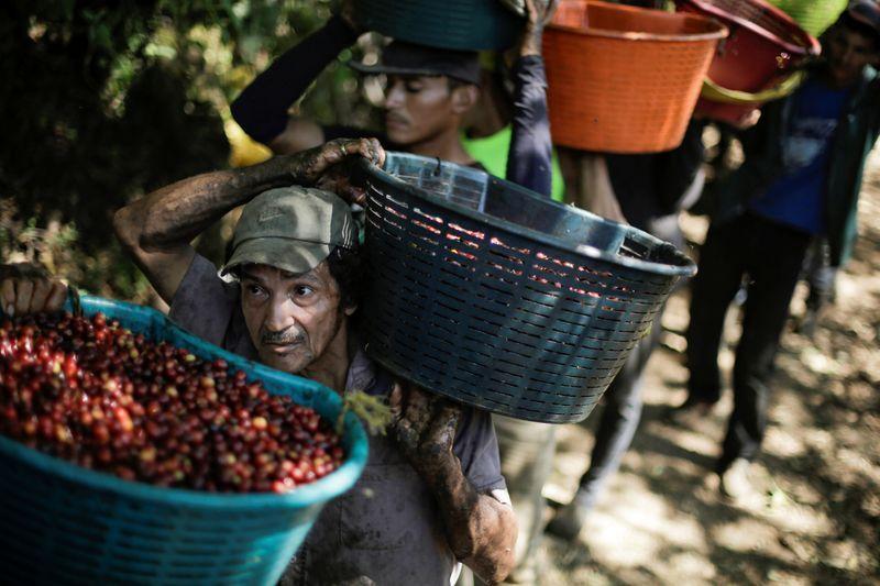 Cafetaleros de Costa Rica preocupados por falta de recolectores para la cosecha por pandemia