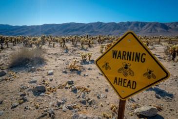 Bees Sign - Joshua Tree National Park, California