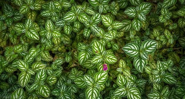 Botanic Wallpaper