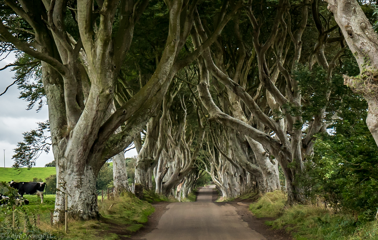 Dark Hedges - Northern Ireland