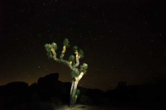 Night Light - Joshua Tree National Park, California