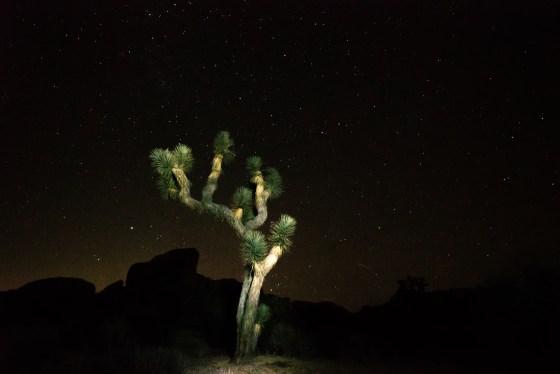 Night Light - Joshua Tree National Park, California