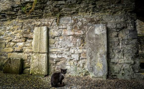 Sligo Abbey - Ireland