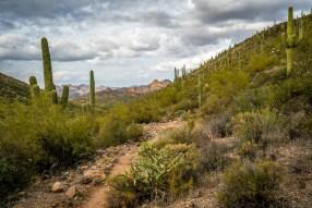Dense Trail - Superstition Wilderness, Arizona