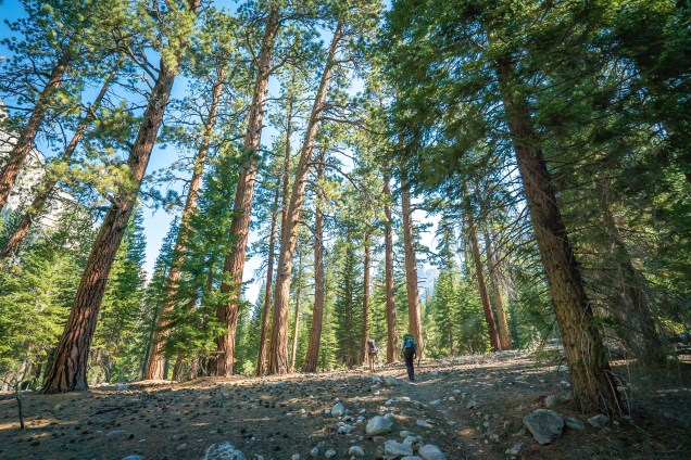 Kern Valley Forest