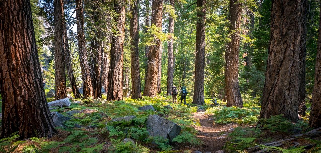 Kern Valley Dark Forest