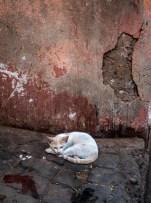 Cat on a Dirty Floor