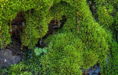Glacier National Park - Moss