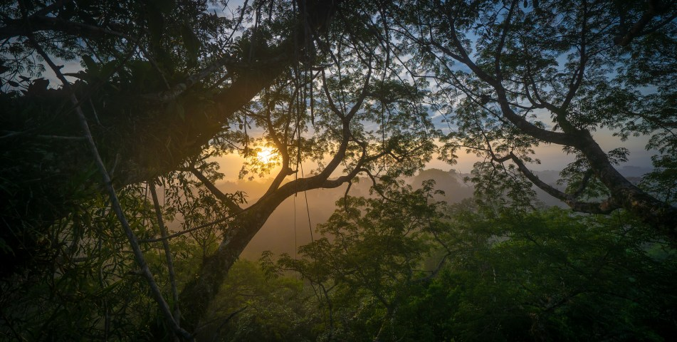Sunrise Through the Jungle