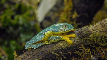 turquoise frog (1 of 1)