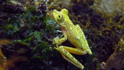 yellow frog (1 of 1)
