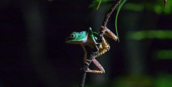 Frog CU