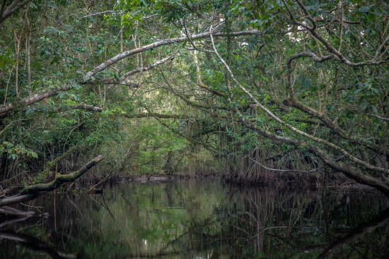 Heavy-Growth-in-the-Lagoon