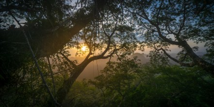 Sunrise Through the Jungle