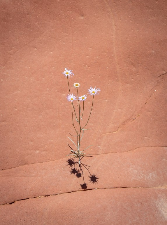 Capitol-Reef-Perserverence