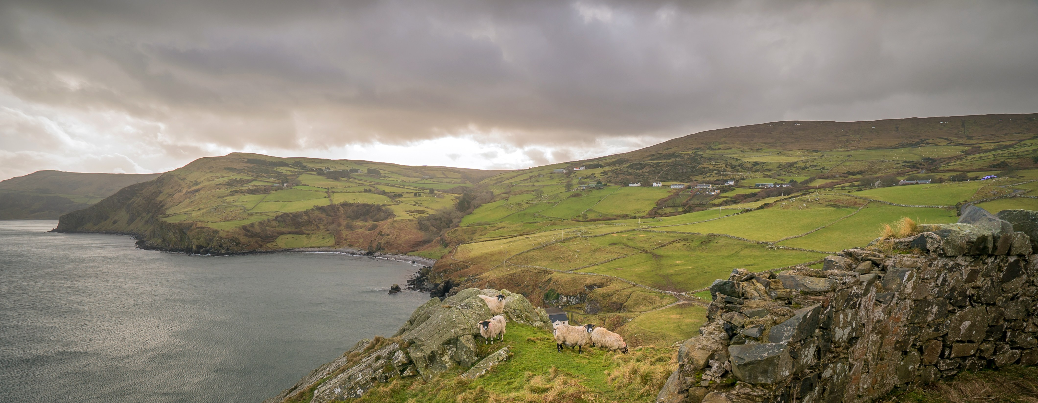 Sheep-at-Torr-Head
