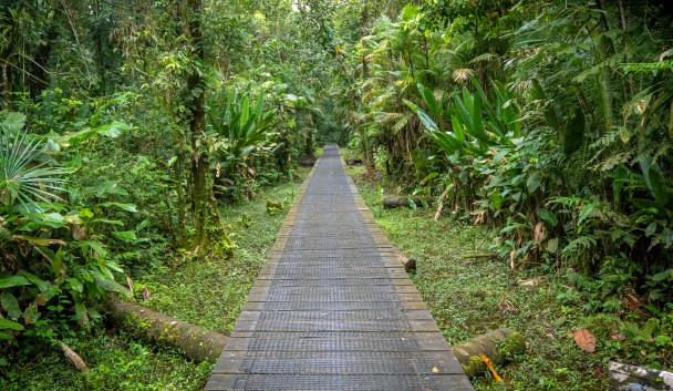 Boardwalk to Sani Lodge