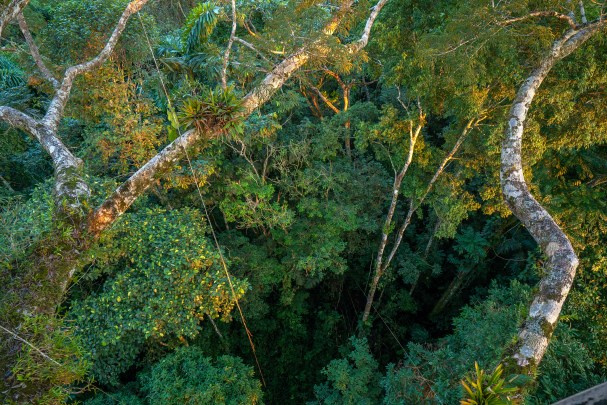 Canopy Looking Down