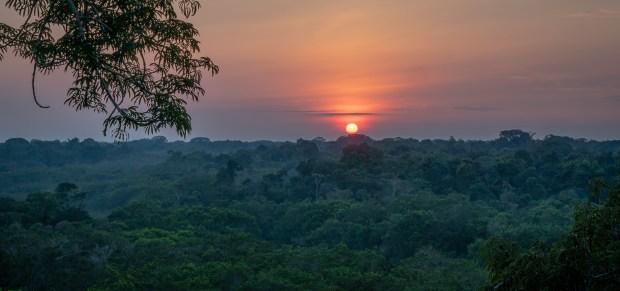 Jungle Sunset