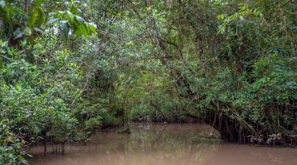 Muddy Lagoon