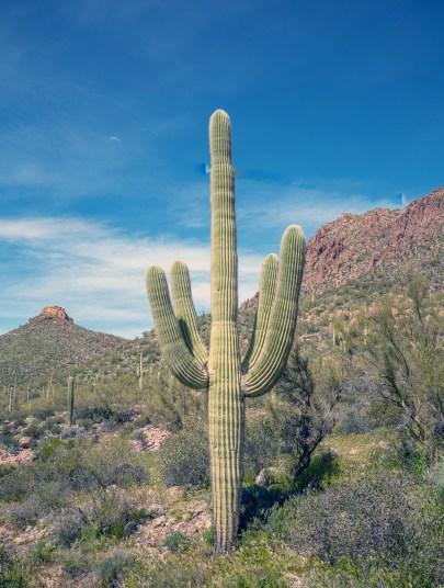 Nice Saguaro