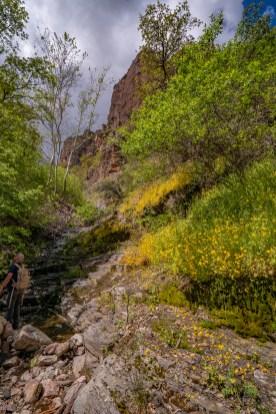 Monkeyflower Grotto