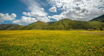 Afton Valley