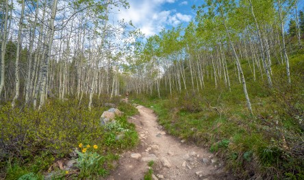 Taggert Lake Trail WS