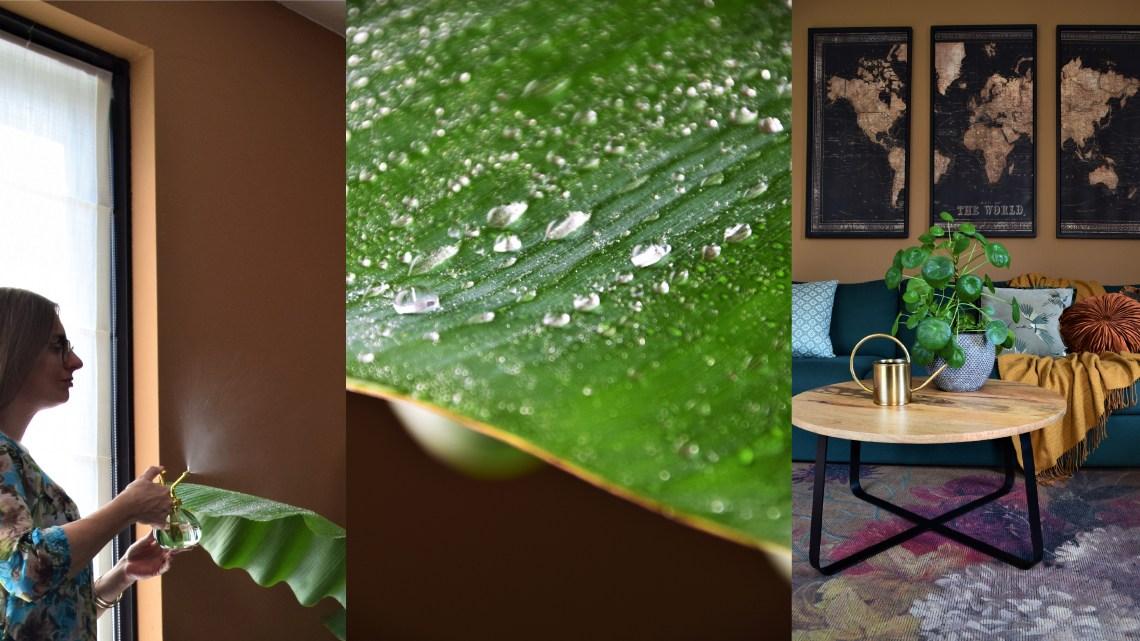 Met deze verzorgingstips geniet je langer van jouw kamerplanten! (Deel 1)