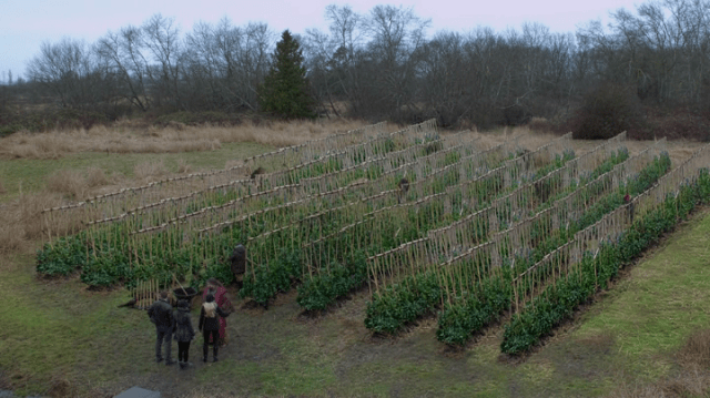 a screencap of a field of magic bean plants