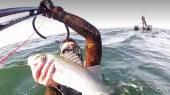 Bar, faudra-t-il interdire la pêche ?