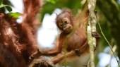 Au coeur de la vie sauvage de Bornéo