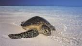 Sous le signe de la tortue