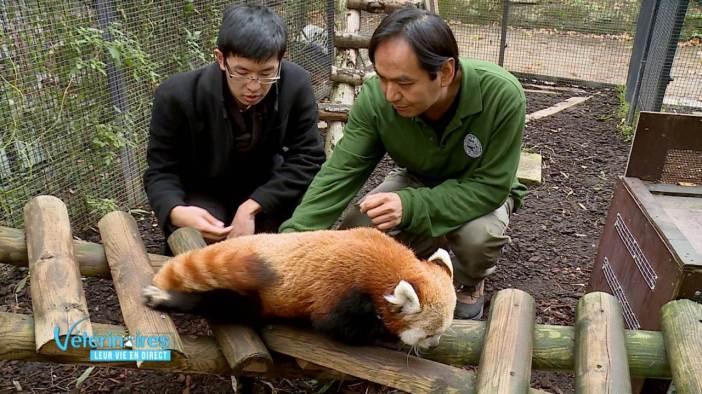 Vétérinaires, leur vie en direct