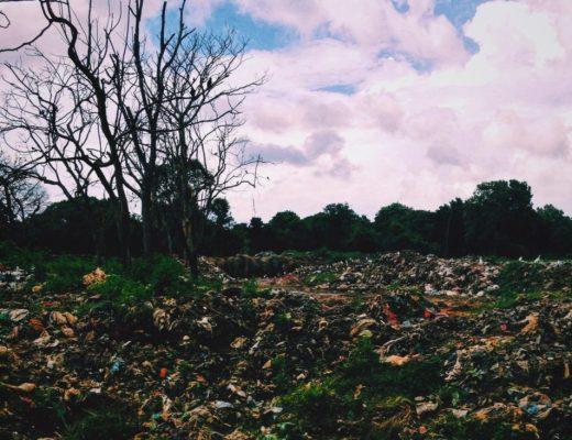 Elephant Trash Dump