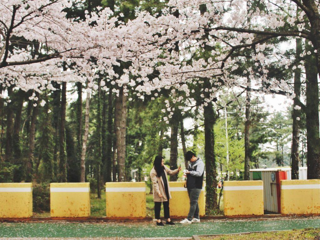 Korean couple enjoying spring in Korea near the Halla Arboretum