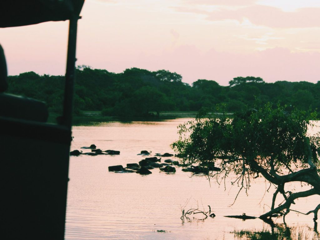 Sunrise in Yala National Park