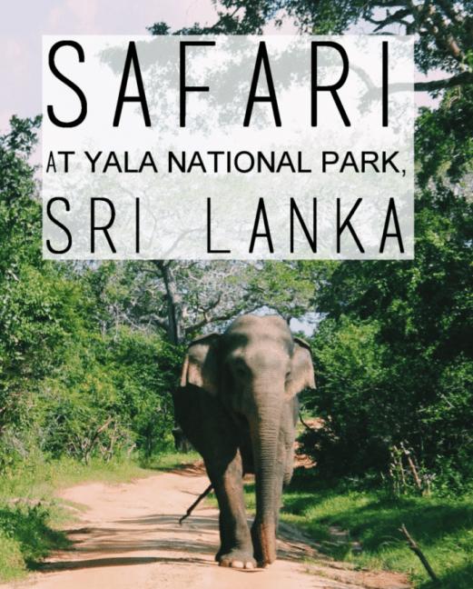 Safari at Yala National Park, Sri Lanka -title