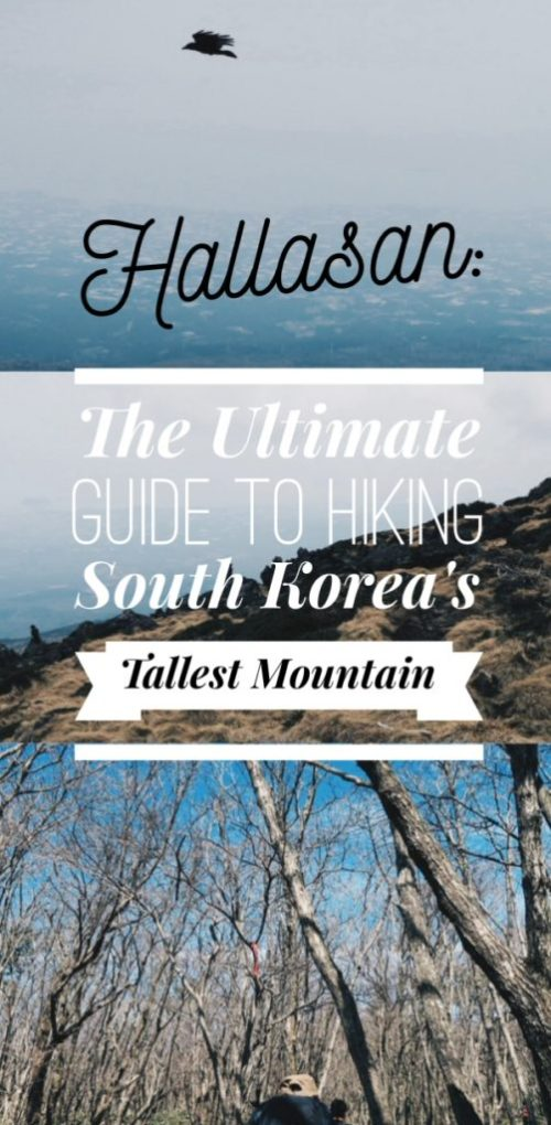 Hallasan: The Ultimate Guide to Hiking South Korea's Tallest Mountain on Jeju Island, South Korea
