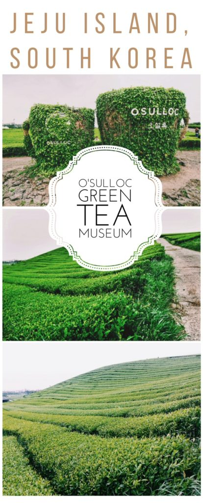 A guide to to the bright green tea fields of the O'Sulloc Tea Museum on the beautiful Jeju Island off the coast of South Korea.