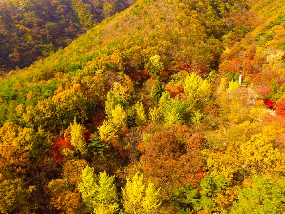 Daedunsan Mountain, Green to Yellow trees