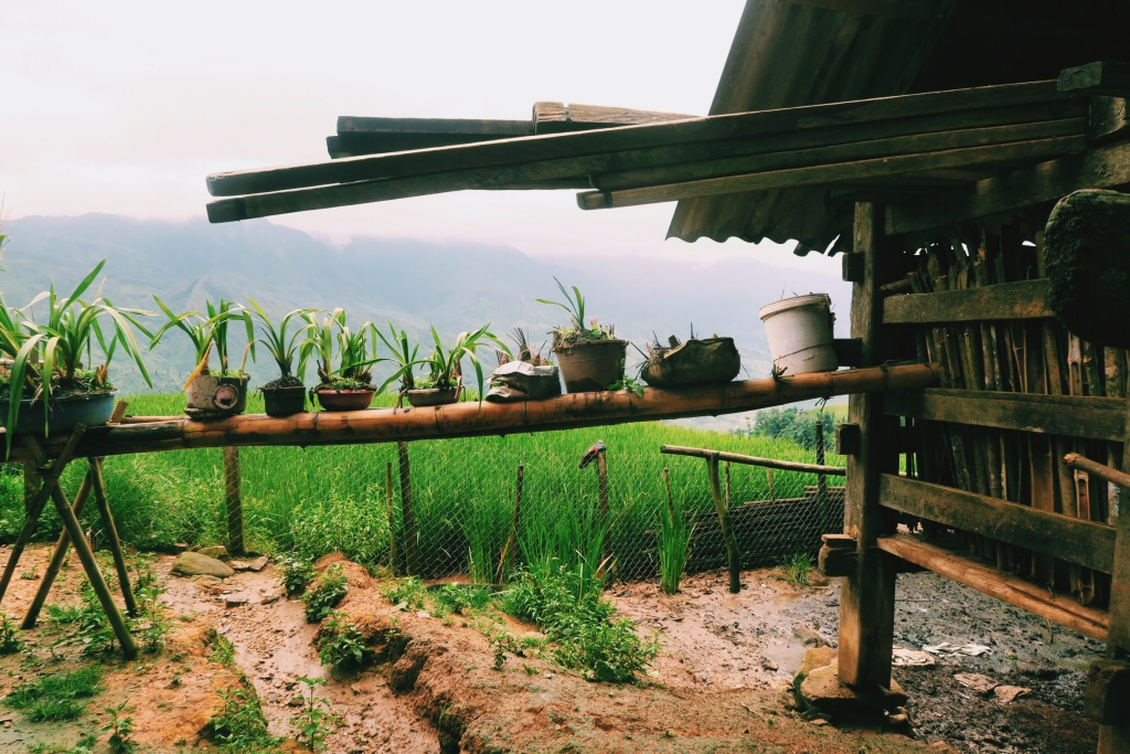 Homestay with the Hill-tribes in Sapa, Vietnam