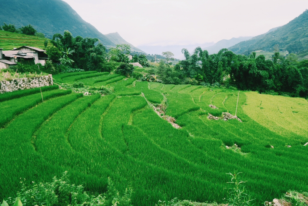 rice-terraces-sapa-trek-vietnam