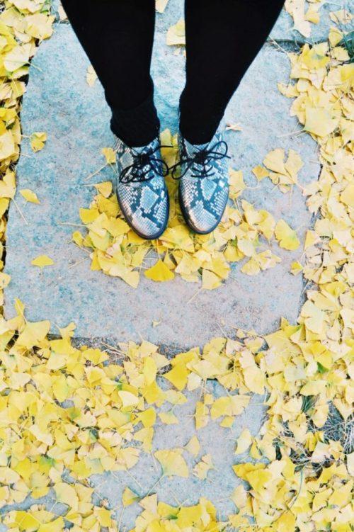 South Korea autumn leaves, Nami Island