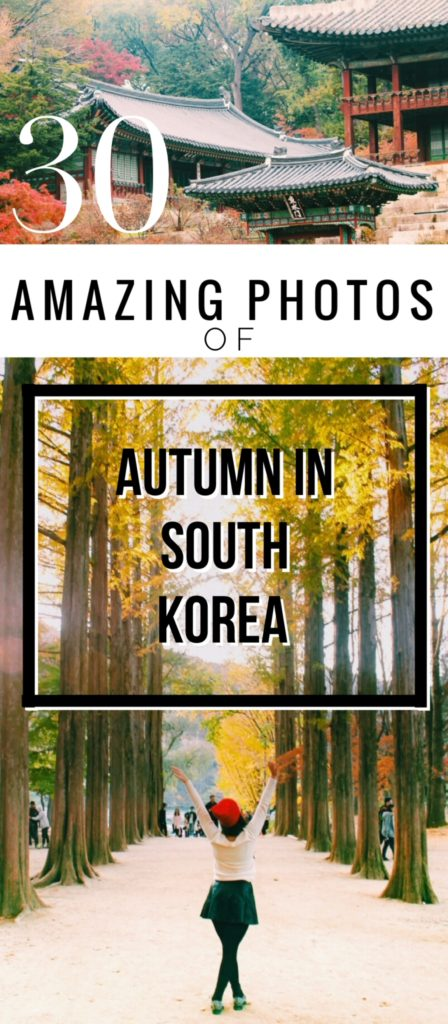 30 Amazing Photos of South Korea in Autumn: With sugary cinnamon stuffed pancakes, harvest bounty, toasty drinks, cheeky mountains and near-neon autumnal hues, the South Korea autumn just won at life.