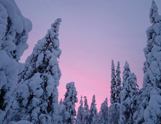 Finnish Lapland - tigrest, top winter travel destination