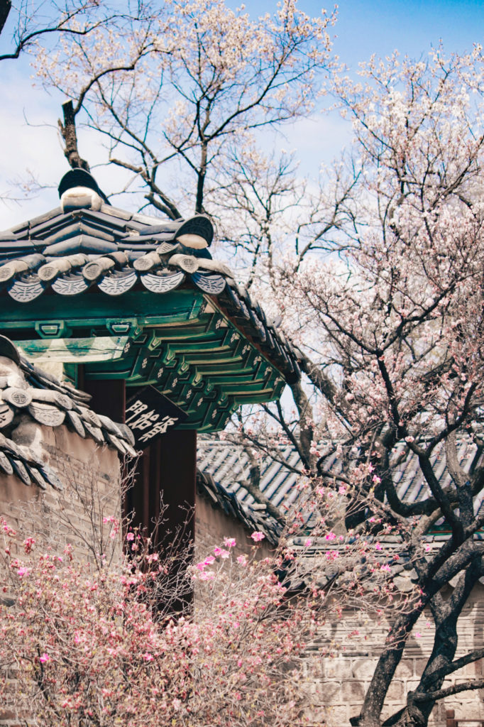 Changdeokgung Palace is lovely for spring Korea season