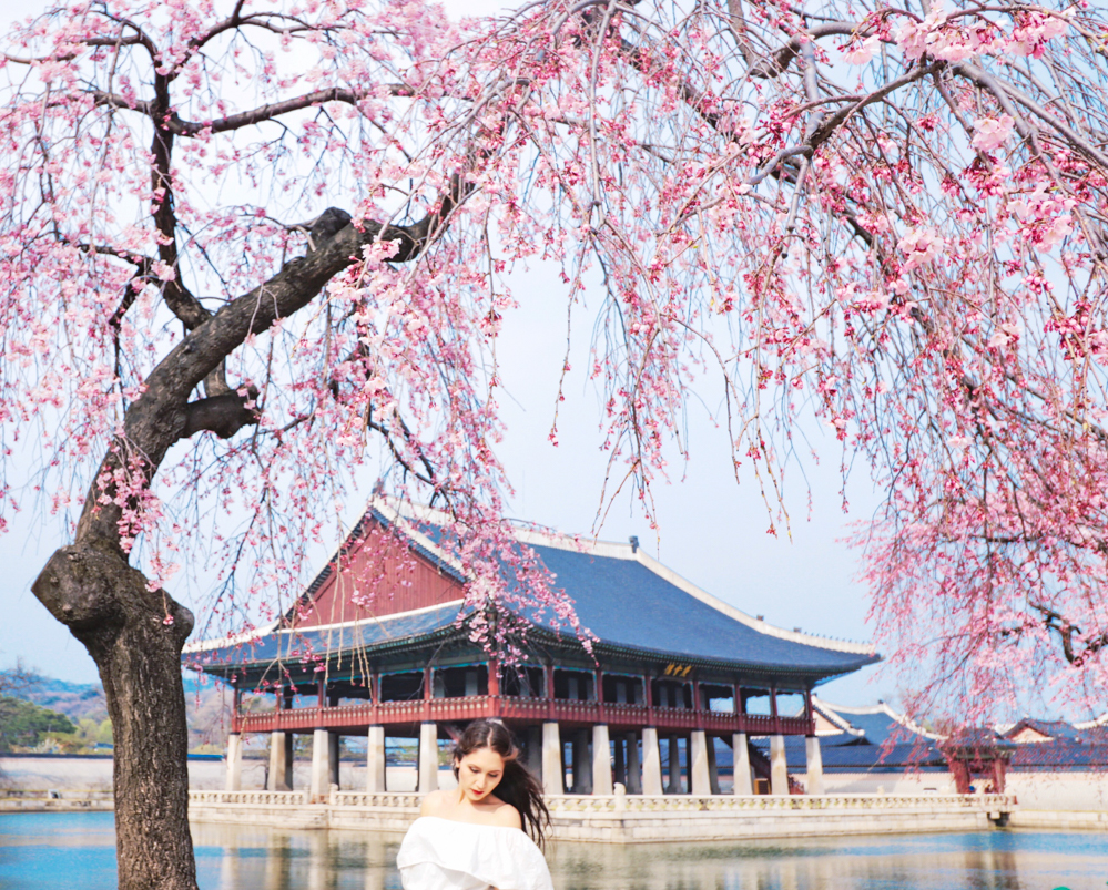 Seoul in Spring Korea cherry blossom