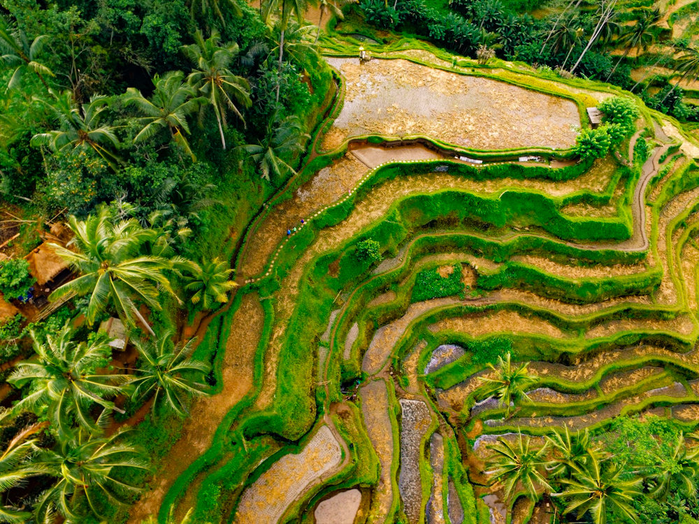Drone photography of the amazing Tegalalang Rice Terraces in Ubud, Indonesia with DJI Phantom