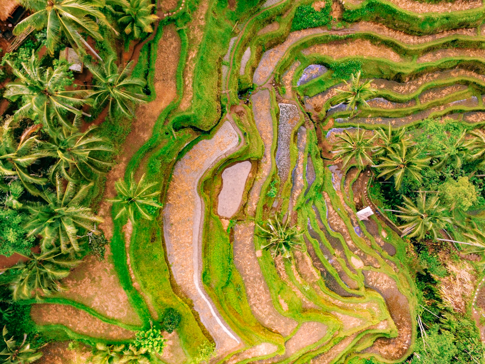 A Bali Travel Guide to the amazing Tegalalang Rice Terraces in Ubud, Indonesia